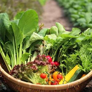 野菜を食べることが「最高のダイエット法」である理由
