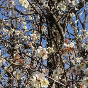 「春!?の便り」