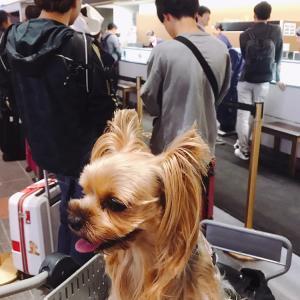 土曜日のAM5:30…羽田空港は大混雑!途中の航路も揺れが予想されるとか!