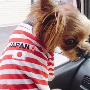 羽田空港、高速道路、一般道 … どこもかしこも『大渋滞』
