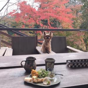 益子に出かけたら…『森のレストラン』おススメです。しかもテラス席はペット同伴可