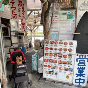 マグロ卸のマグロ丼の店(店名)… プロの経営するお店は『選手村』の対面、しかもペット同伴可