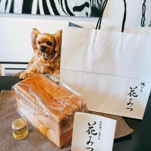 豊洲に・高級食パン・やってきた!… 『豊洲蜂蜜プロジェクト』で生み出された蜂蜜で食べてみよう!