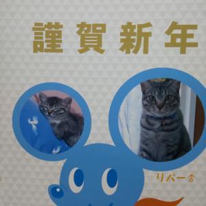 今日は猫の日
