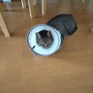 愛猫との再会と家の中の移動