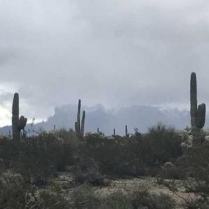 アリゾナに雪が・・・
