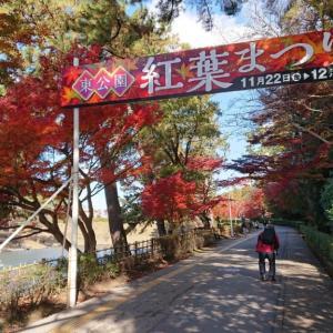 東公園紅葉まつり
