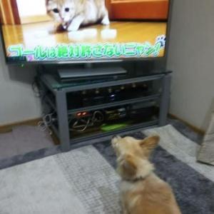 テレビに吠える
