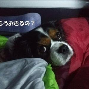 日の出見てお汁粉~真鶴岬・三ツ石~