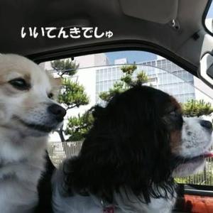 うちのワンコはささ身好き(^_^)
