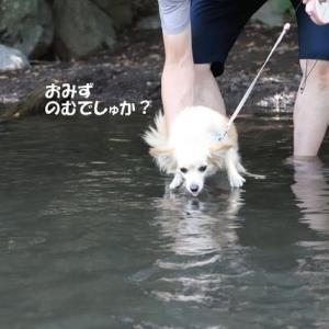泳ぐの上手じゃん!