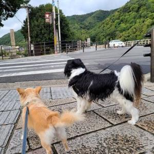 京都・嵐山で笑顔の子たち