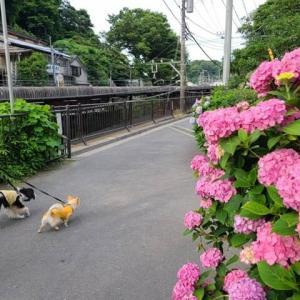 早朝から「鎌倉」散歩