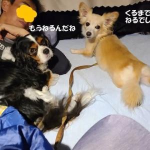 「まる」「りん」と芦ノ湖カヤック(その1)