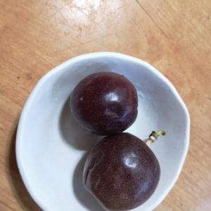 パッションフルーツの収穫