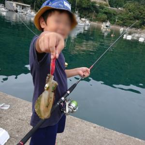 男旅! 息子と若狭へ(前編)~エギであの高級魚が!~