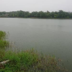 雨天の野池
