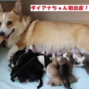 ダイアナ新米ママに! 巣立ち準備完了!