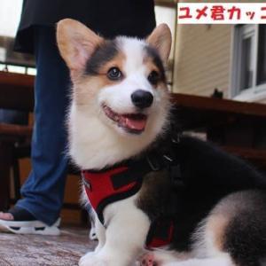 長野より里帰り出産のカンナちゃんお迎え、ミミちゃん、ココちゃん里帰り