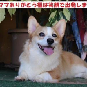福ちゃん横浜へ巣立ちました!