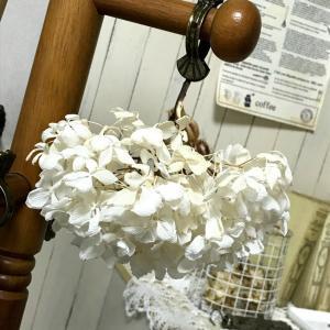 漂白したアジサイのドライフラワー 真っ白になって可愛い