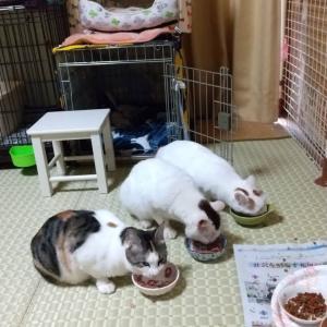 """""""29日(水)完全予約制お見合い会"""""""