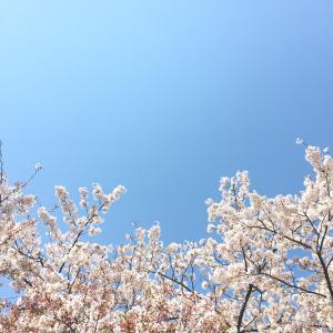 今日はあんパンの日、桜。