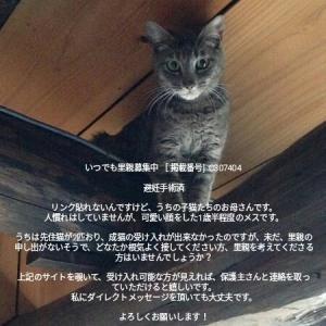 野良猫の里親募集中です!可愛いメス猫お願いします!