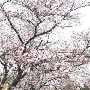 お花見かな 2020/4/6