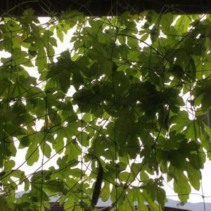 秋冬野菜最後の種まき