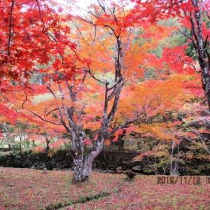 感動の篭坊温泉の紅葉はこの土日ですよ!
