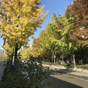 韓国3日目 美活からブラブラ街へ