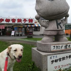 宇都宮餃子食べました