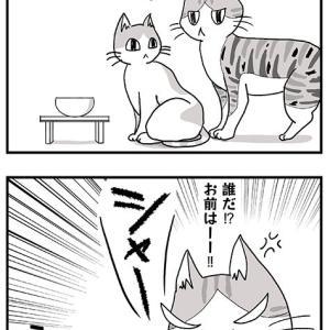 面倒くさい猫