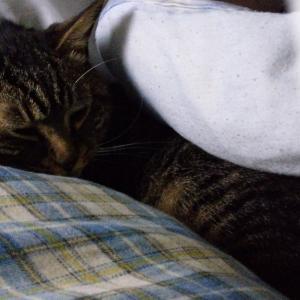 隣で寝るにゃんこ