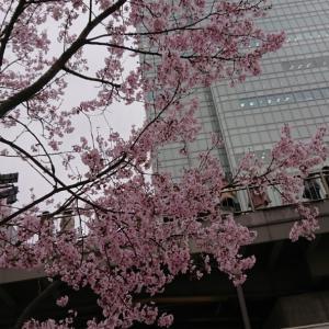 新宿駅@オイスター&利久のお弁当♪