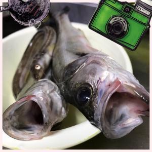 季節の魚と珍味【むかご】のお話!