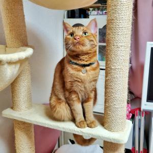 チマチマ猫刺繍