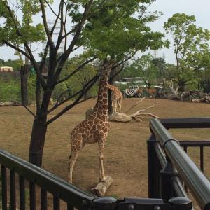 【動物園】よこはま動物園ズーラシアに行くべき5つの理由