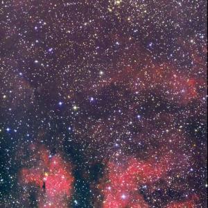 はくちょう座 サドル付近 IC1318