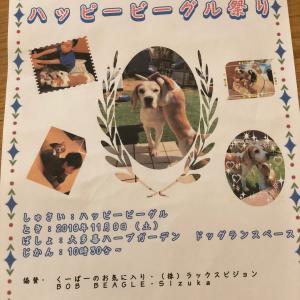 千葉ビーグル祭り…準備中でーす!!!