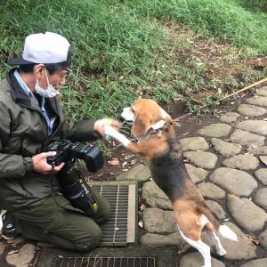 犬舎フェンス改修工事開始しました〜!!!