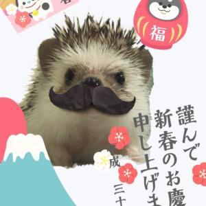 まるっと小動物展 in名古屋