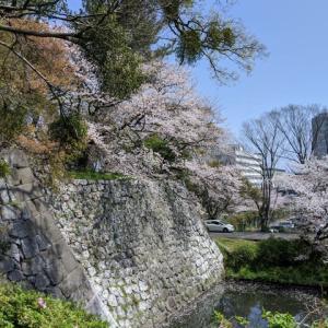 久留米、篠山城の桜見ごろ、周辺をウォーキング