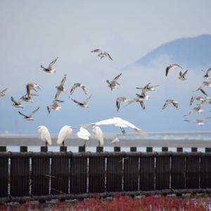 秋の佐賀の有明海岸と空港道路のコスモス