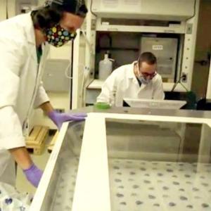 ハワイ大学マノア校の2人の学生が マスクの縫製キットを作成