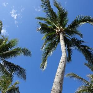 ハワイ3か所のDFSの従業員の約半数を解雇