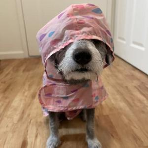 雨なのよねぇ