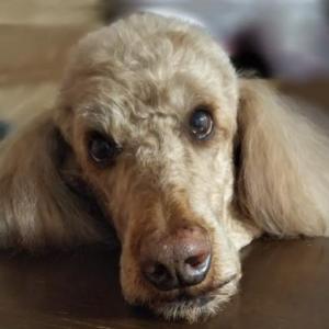 狂犬病予防集合注射