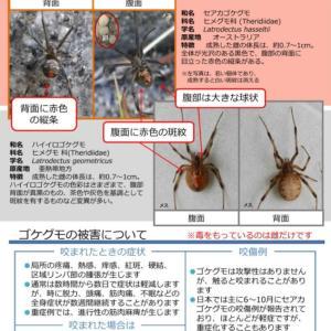 石垣島で注意喚起!☆